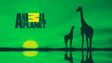 Photo of Animal Planet New Frequency Channel 2021